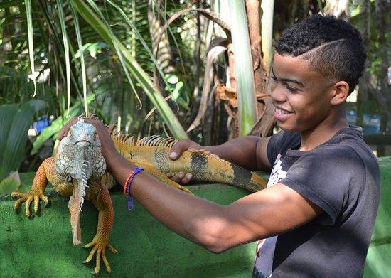 boy holding iguana