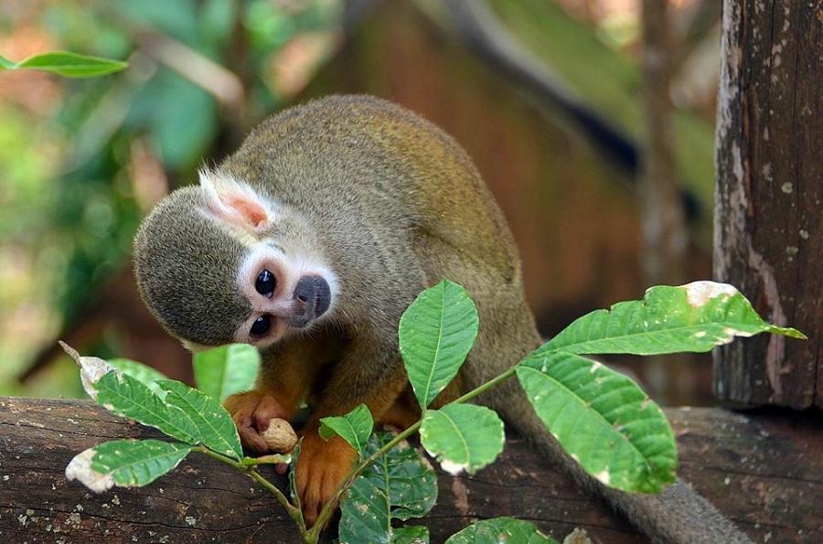 Monkey reflecting